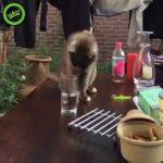 verre a eau chat